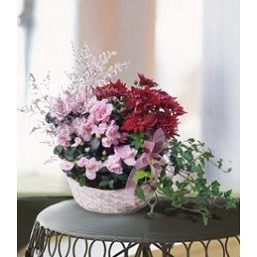 Mum Planter Basket