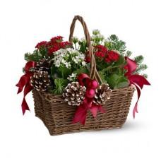 Christmas Blooming Garden