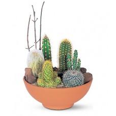 Cactus Desert Plants