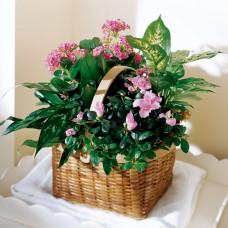 Pink Assortment Plant Basket