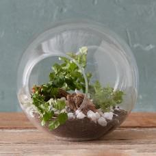 Crosswinds Vase with Plants