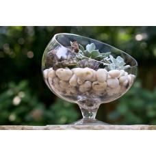 Plants in Bias Bowl