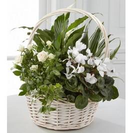 Dish Garden Tribute Gift Idea