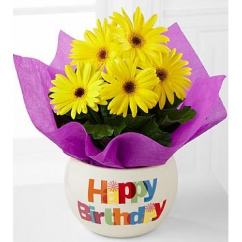 Happy Birthday Gerbera daisy