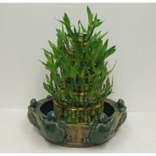 Natural Living Bamboo