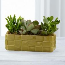 Succulent Dish Garden Gardening Plants