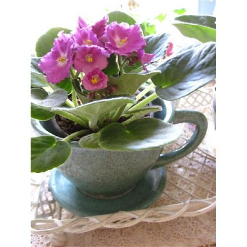 Violet In Teacup