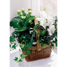 White Assortment Basket