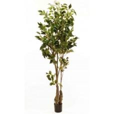 6' Classic Ficus Tree - Silk